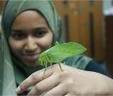 Brummie-kids-in-Malaysia-grasshopper20121113_0011