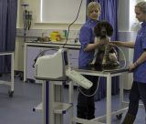 UoN Vet School wins Guardian University Award