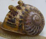 jeremy snail