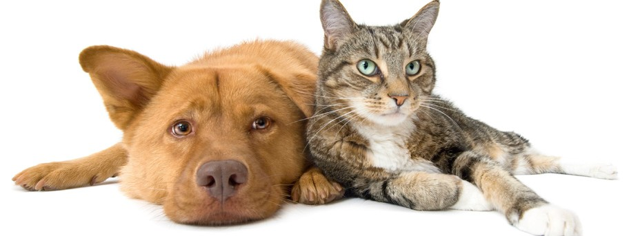 Stemming The Tide Of Stray Cats And Dogs  U2013 Research  The